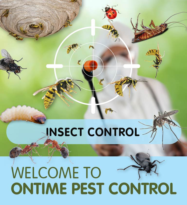 Insect Control in Boston Manor W7 & throughout West London