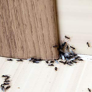 How To Get Rid Of Crawling Insect Infestations In Boston Manor W7