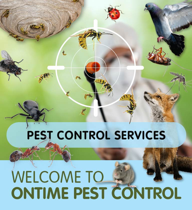 Pest Control in Roehampton & throughout South West London