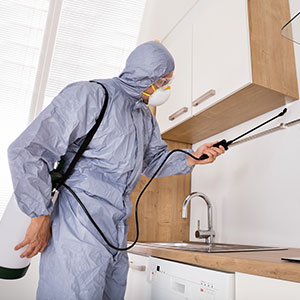 Our 24 hour Pest Control & House Cleaning Services are also available for commercial business premises in Longford 24/7.