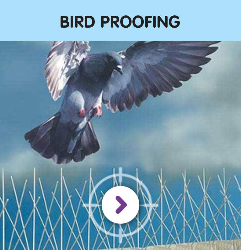 PEST CONTROL BIRD PROOFING