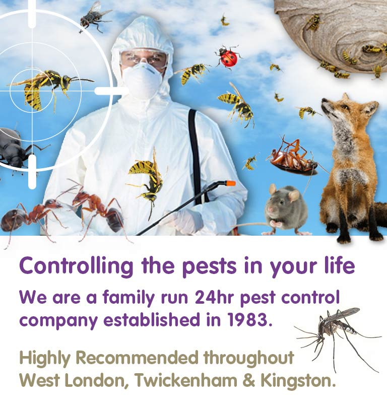 All Your Pest Problems, Gone. Family Run 24 Hr Pest Control Company Established In 1983 Highly Recommended throughout West London, Twickenham, Kingston & Richmond.