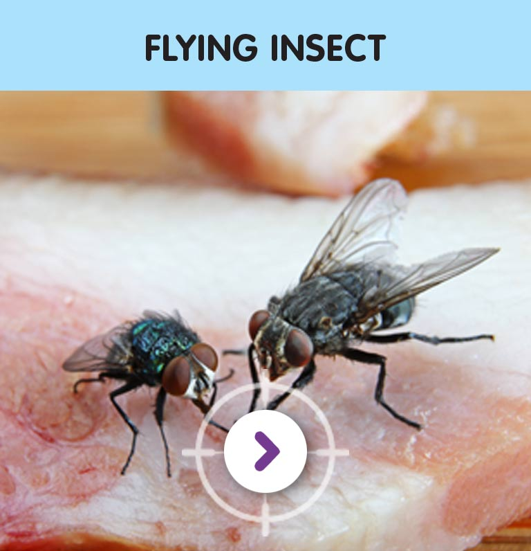 PEST CONTROL FLYING INSECTS