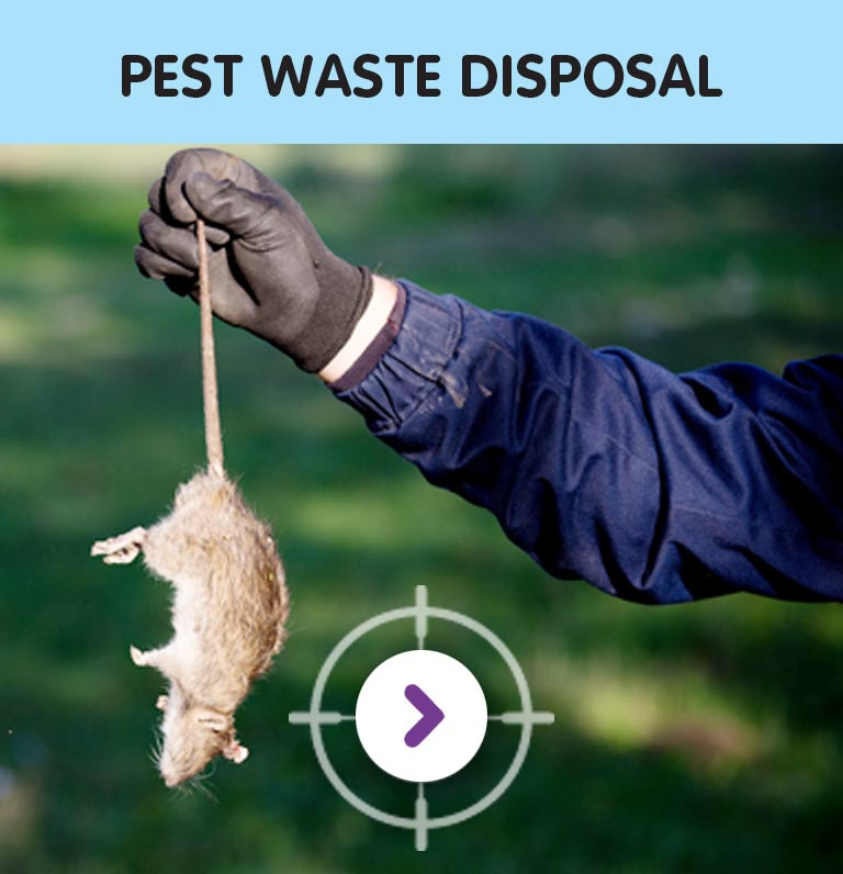 PEST WASTE DISPOSAL SERVICES
