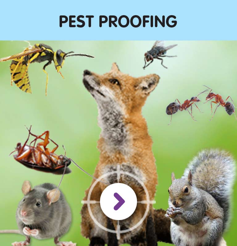 Rodent Control Hounslow West TW4 & throughout West London