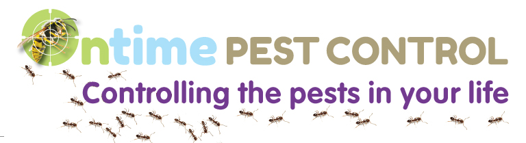 24 Hour Pest Control in West London, Twickenham, Kingston & Richmond