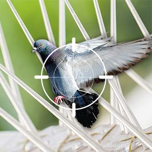 Bird Spike Installation for Homes & Businesses across West London