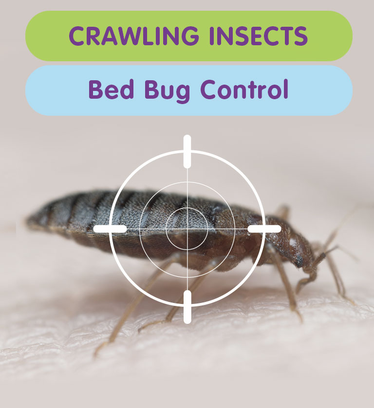 How to get rid of a Bed Bug Infestation from your West London Property