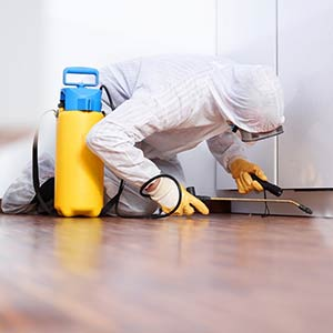 Our pest control team will control the Bed Bug infestation in your property through isolation, heat treatment and by disposing of contaminated items in your household.
