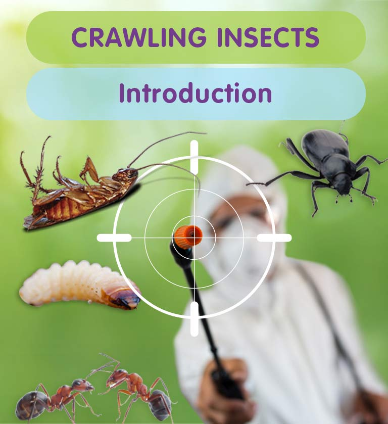 Pest Control for Crawling Insects in West London