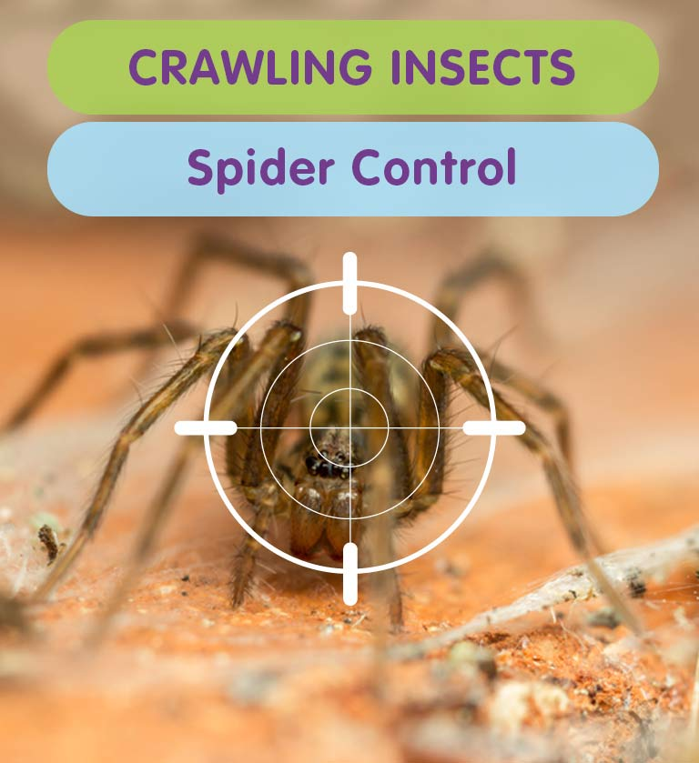 Get Rid of Spiders & Spider Infestations from your West London Property
