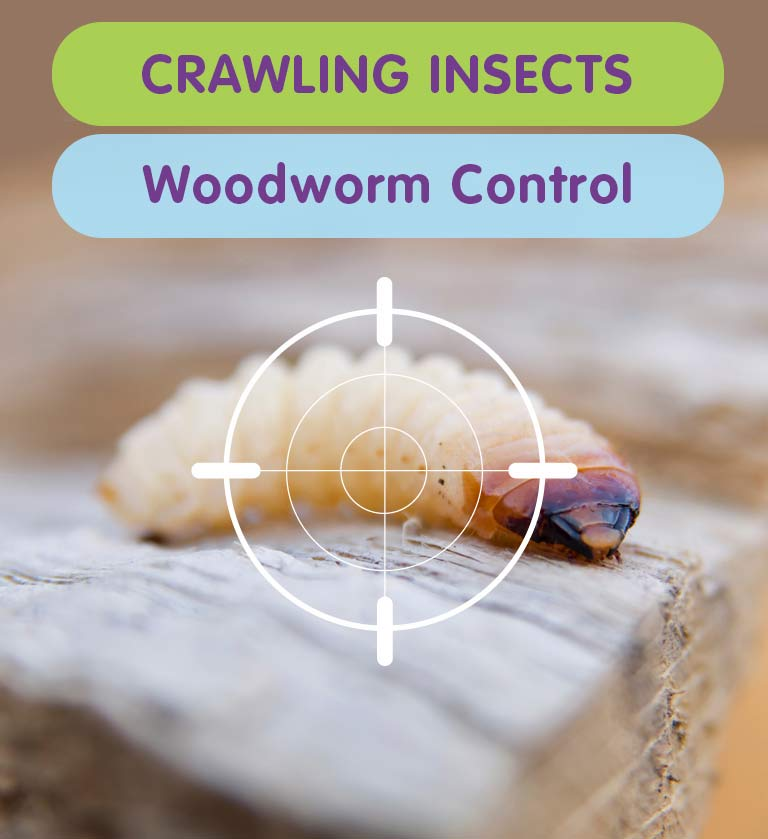 Woodworm Treatments for your West London Property