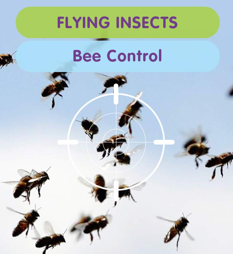 Bee Control & Bee Removal from your West London property