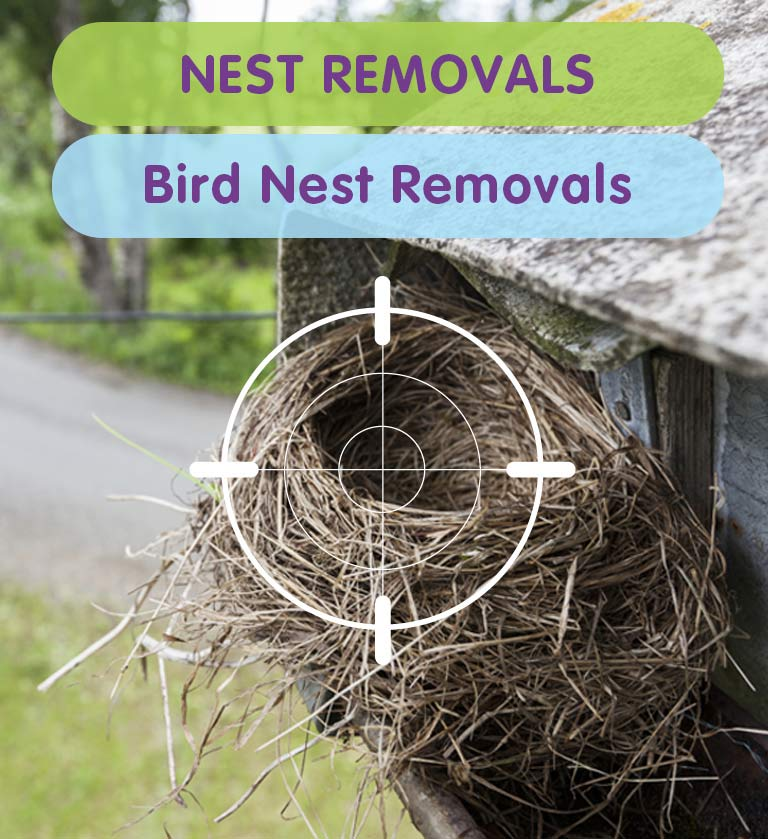 Bird Nest Removal for Homes & Business Premises in West London