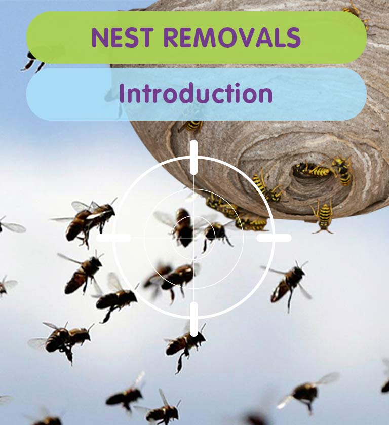 Nest Removals in West London, Twickenham, Kingston & Richmond