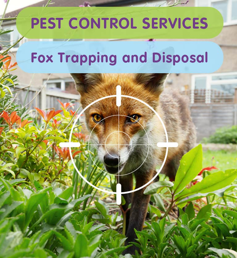 Fox Trapping & Removal in West London