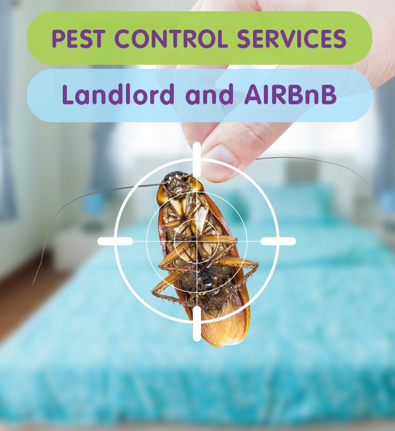Pest Control for Private Landlords & Airbnb Hosts in West London