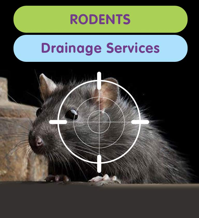 Drainage Services for Rodent Proofing in West London