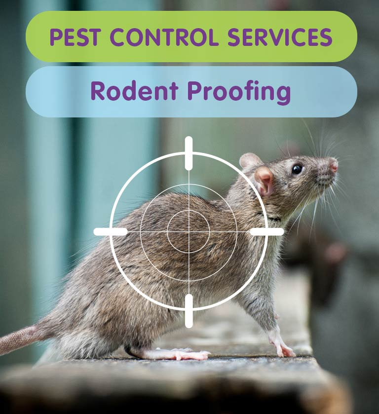 Rodent Proofing   Rodent Control   West London   Kingston