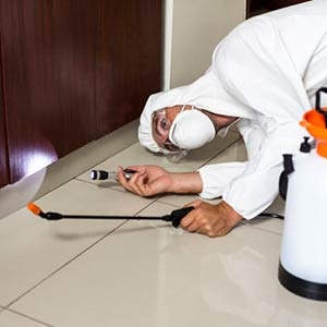 Rodent Proofing | Rodent Control | West London | Kingston