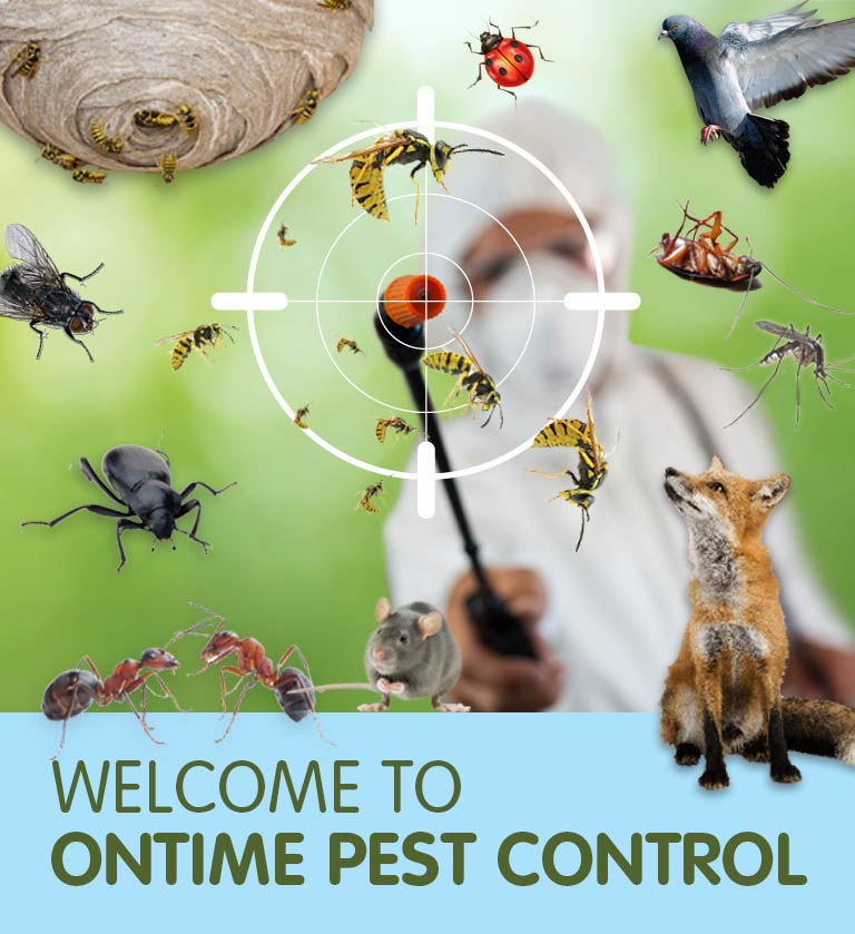 Welcome to On Time Pest Control