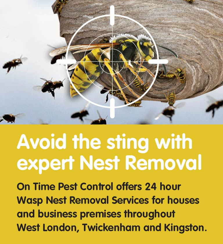 Pest Control Nest Removal Services
