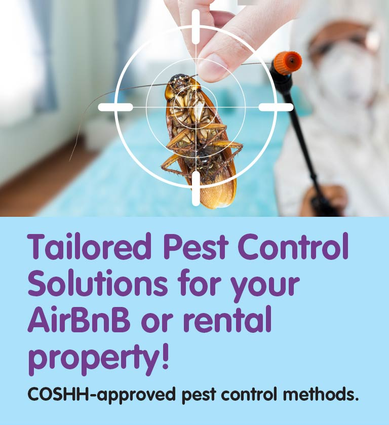 Pest Control for Landlords and AIRBnB